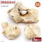 化石サンゴ 3個セット(ベース用) 10〜15cm 関東当日便