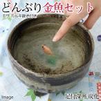 (国産金魚)ピンポンパール 当歳(1匹)+足付深丼 炭化 どんぶり金魚 育成・飼育セット