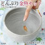 (国産金魚)ピンポンパール 当歳(1匹)+足付深丼 白マット どんぶり金魚 育成・飼育セット