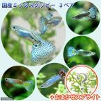 (熱帯魚 水草)国産ミックスグッピー(3ペア)+スプライト1種(3株セット)北海道・九州航空便要保温