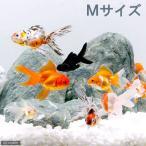 (国産金魚)オタマ金魚ミックス 6〜9cm(5匹) 北海道・九州航空便要保温