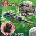 (エビ・貝)生餌 大型淡水フグ用 スジエビ(20g) + ヒメタニシ(30匹) 北海道航空便要保温