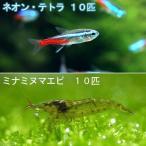 (熱帯魚)ネオンテトラ(10匹) +ミナミヌマエビ(10匹) 北海道・九州・沖縄航空便要保温