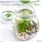 (熱帯魚 水草)私の小さなアクアリウム アカヒレボトルセット 〜アナカリスとウィローモス〜(1セット)説明書付 本州・四国限定