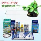 (水草)アピストグラマ繁殖用水槽セット 本州・四国限定
