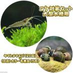 (エビ・貝)ヤマトヌマエビ(20匹) +(B品)カラー石巻貝(5匹)