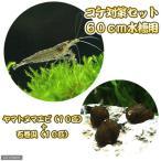 (エビ・貝)コケ対策セット 60cm水槽用 ヤマトヌマエビ(10匹) + 石巻貝(10匹)
