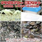 (エビ・カニ)サワガニブルー 飼育セット(1ペア) 本州四国限定 北海道航空便要保温