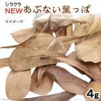 シラクラ NEWあぶない葉っぱ 1パック(4g) マジックリーフ モモタマナ エビ 飼育 関東当日便