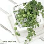 (観葉)グリーンネックレス 陶器鉢植え ニューダイスS WH(1鉢) 受け皿付き 説明書付き