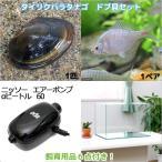(淡水魚)タイリクバラタナゴ ドブ貝セット 水槽 飼育用品付き 本州・四国限定