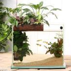 Yahoo!チャーム charm ヤフー店(熱帯魚 観葉植物)グラスガーデンS300 プランツアクアスタイル グッピーフルセット 説明書付き おしゃれ水槽セット 本州・四国限定
