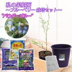 (観葉)私の果樹園 〜ブルーベリー栽培セット(パウダーブルー)〜(苗木・土・プランター・肥料他6点セット) 家庭菜園