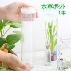 水草ポット 1本 関東当日便