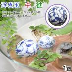 スドー 浮き玉(中) 笹 浮き球 アクセサリー 関東当日便