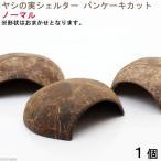 形状お任せ ヤシの実シェルター パンケーキカット 1個 ココナッツシェルター