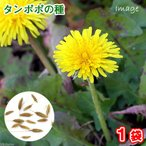 たんぽぽの種(1袋)ハーブ 栽培 家庭菜園 種子 関東当日便