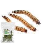 (生餌)ビッグミルワーム(ジャイアントミルワーム) 300g 栄養強化セット 本州・四国限定
