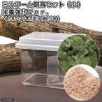 ミルワーム飼育セット(小) 栄養強化セット 爬虫類 両生類 大型魚 エサ