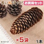 長野県産 長い松ぼっくり 1個×5袋 小動物のおもちゃ パインコーン 国産 無添加 無着色 関東当日便