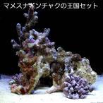 (海水魚)マメスナギンチャクの王国 30cmキューブ水槽用セット 北海道・九州・沖縄航空便要保温
