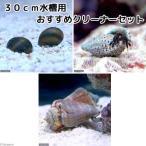 (海水魚 無脊椎)30cm水槽用 おすすめクリーナーセット コケ・底砂の掃除(1セット) 北海道・九州・沖縄航空便要保温