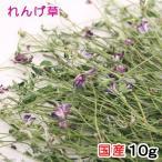 平成29年産 国産 れんげ草 10g 小動物のおやつ 無添加 無着色