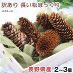 長野県産 訳あり長い松ぼっくり 2〜3個 小動物のおもちゃ パインコーン 国産 無添加 無着色 関東当日便