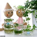(水草)私の小さなアクアリウム 〜水辺の苔と浮草〜(1セット) 本州・四国限定