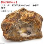 カミハタ アクアリウムロック 木化石 特大