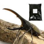 (昆虫)ヘラクレス・ヘラクレス幼虫(3匹) + XLマット カブト用 10リットル(説明書付) 本州・四国限定