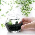 (水草)私の小さなアクアリウム 〜ホシクサとマリモ〜(1セット) 説明書付 本州・四国限定 本州四国限定