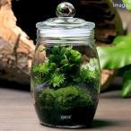 (観葉植物)GEX ボトリウムボトル ハニー 苔レイアウトセット 本州四国限定
