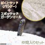 (海水魚)ばくとサンド パウダー(9L) + スポッテッドガーデンイール(2匹)セット