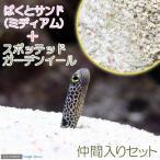 (海水魚)ばくとサンド ミディアム(9L) + スポッテッドガーデンイール(2匹)セット 北海道航空便要保温