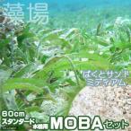 (海水魚 海草)60cmスタンダード水槽用 MOBAセット(ミディアム)(1セット) 北海道・九州航空便要保温 沖縄別途送料