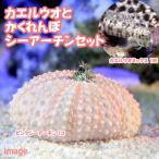 (海水魚)カエルウオ ミックス+隠れんぼシーアーチン(1セット) 北海道・九州・沖縄航空便要保温