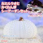 (海水魚)ツースポットブレニー+隠れんぼシーアーチンセットB(1セット) 北海道・九州・沖縄航空便要保温