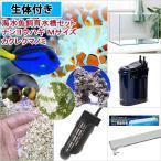 後日生体(海水魚)海水魚飼育水槽セット ナンヨウハギMサイズ1匹&カクレクマノミ2匹 アクロ45 ビギナーにオススメ 本州・四国限定