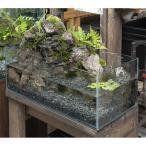 (観葉植物) 日本の水景 〜渡良瀬〜 岩組と滝とめだか 60cmlowレイアウト水槽セット お一人様1点限り 本州四国限定