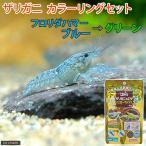 (ザリガニ)ザリガニカラーリングセット フロリダハマー Sサイズ(約2〜5cm)(1匹)+ザリガニの餌 イエローマジック 本州四国限定
