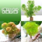 (水草)メダカ・金魚藻 ライフマルチ(茶) カボンバ 3種カラーセット 各3個(計9個)