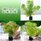 (水草)メダカ・金魚藻 マルチリング・ブラック(黒) カボンバ 3種カラーセット 各1個(計3個) 北海道航空便要保温