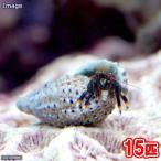 (海水魚 ヤドカリ)沖縄産 ヤドカリミックス Sサイズ(15匹) 北海道・九州航空便要保温