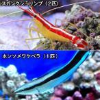 (海水魚 無脊椎)ドクターセット(1セット) 北海道・九州・沖縄航空便要保温