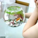 (金魚)昔なつかし with金魚セット charm version 飼育セット