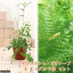 (ビオトープ/水辺植物)(淡水魚)インスタント・ビオトープ+ヒメダカ(6匹) 説明書付 本州四国限定