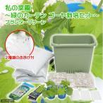 (観葉)私の菜園 緑のカーテン ゴーヤ 苗栽培セット 菜園上手グリーン(おまけ・説明書付) 家庭菜園