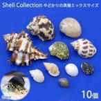 (海水魚 貝殻)やどかりの貝殻 ミックスサイズ おまかせ(殻口3~20mmミックス)(10個)(形状おまかせ)