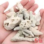サンゴ石 2~5cm(形状お任せ) 5個